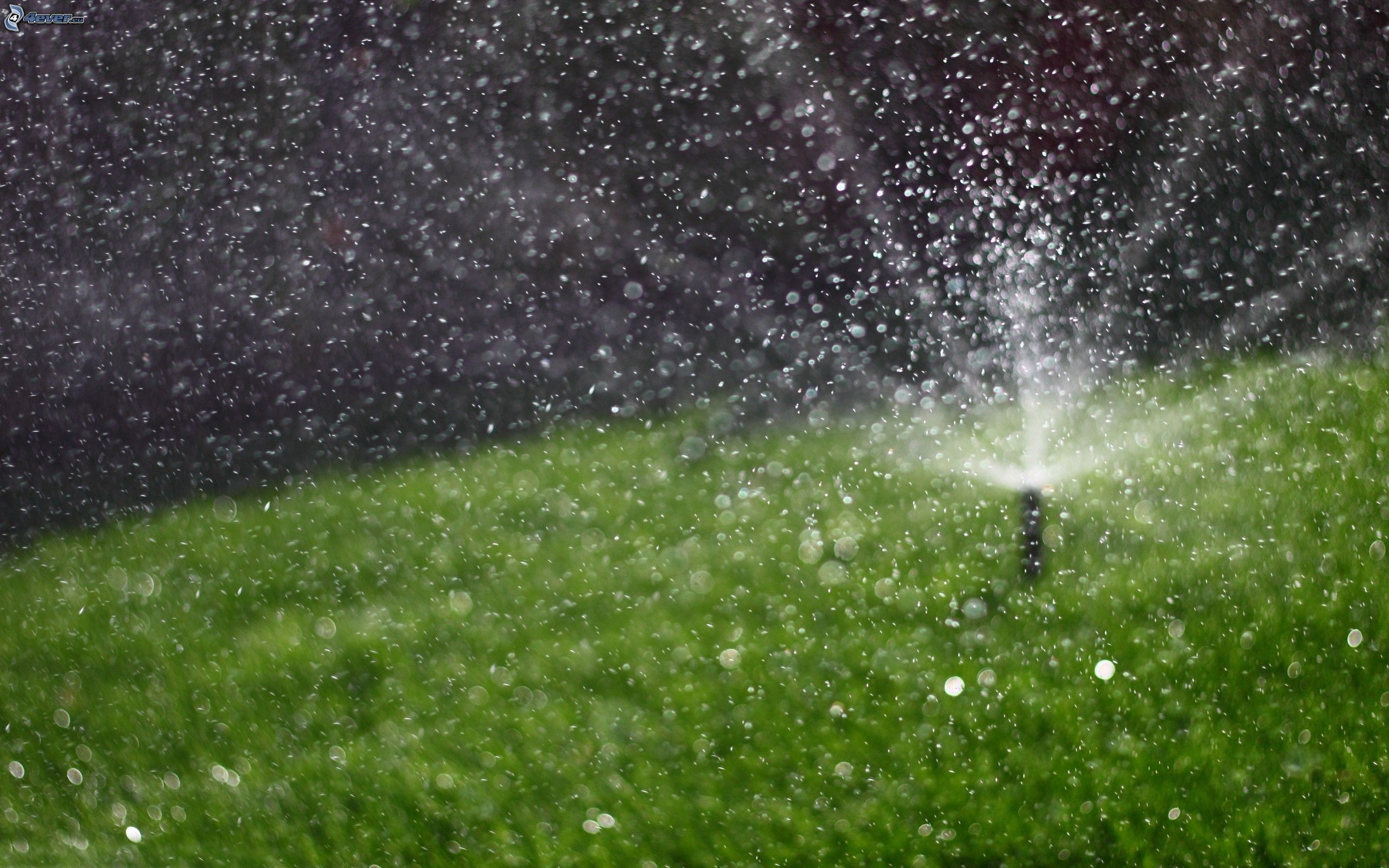 irrigation,-lawn,-drops-of-water-163459